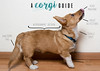 humphrey. (ultimategingerqueen) Tags: corgi dog puppy diagram infograph