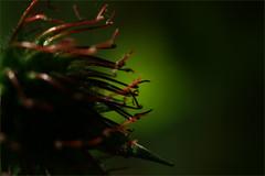 Poison tentacles. Dark feelings. (Gudzwi) Tags: dark crazytuesdaytheme darkfeelings 7dwf poison green red macro closeup nature natur grün rot tentacle tentakel spot nahaufnahme dunkel schatten lichtpunkt lightpoint shadow ngc