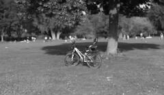 Under the Lime Tree (Amselchen) Tags: mono bicycle blackandwhite bw bokeh bokehpanorama dof blur depthoffield season summer light shadow sony samyang alpha7 85mmf14