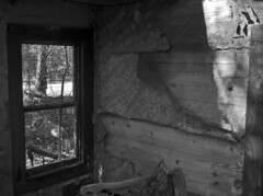 Dog in the Window (PositiveAboutNegatives) Tags: leica leitz leicaflexsl vintagecamera slr 35mmelmarit leicar lab labrador yellowlab dog film analog fuji neopan rodinal coolscan nikon9000scanner abandoned derelict empty vacant deserted rundown shack house cottage