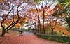 Autumn in Kyoto (Aleksi Mattsson) Tags: kyoto japan japani kioto 京都 日本 日本人 秋 色 赤い 木 森 空 黄色 葉 紅葉 red yellow colors autumncolors autumnleaves autumn 1424mmf28g d800e 自然 nature autumnfoliage