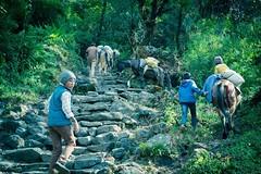 #himalaya #annapurnabasecamp #nepal (passareel) Tags: himalaya annapurnabasecamp nepal