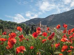 Amapolas del Montsec (efe Marimon) Tags: canonpowershots120 felixmarimon catalunya lleida lanoguera montsec rosellas amapolas