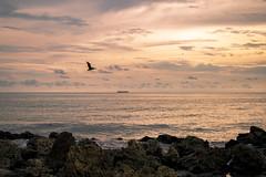 De paso por Cartagena de Indias (johanvalenzuela) Tags: cartagena colombia playa aves malecón atardecer barco horizonte marea mar rocas arena sol cartagenadeindias sunset sea sun