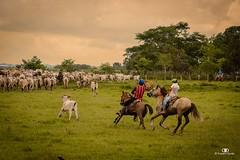 Trabajo de Llano (Franklin Duran) Tags: trabajodellano sabana llanosorientales arauca orinoquia caballos colombia