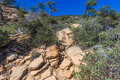 Bear Mountain Trail No. 54 (Coconino National Forest) Tags: arizona bearmountain bearmountaintrail bearmountaintrail54 bearmountaintrailno54 coconinonationalforest forestservice nationalforest redrockrangerdistrict redrocksecretmountainwilderness sedona usfs desert forest hiking outdoors redrockcountry redrocks redrock trail wilderness unitedstates