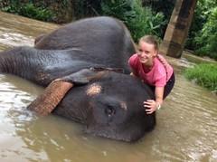 Les éléphants prennent le bain - GlobAlong (infoglobalong) Tags: sri lanka éléphants animaux aide animalier bénévolat asie excursions pêcheurs mahout bain cultures