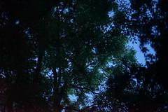 (anjamation) Tags: lookingup evening summer trees wind leaves green blue nuances branches vegetablekingdom lightgreenleavesinthetop towardsthesun unaltered june 2017 sonya7ii forceofnature ilce7m2 nature theoldworld