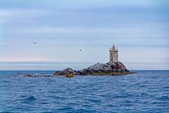 Cormorant stone. Lighthouse. (djvarchuk) Tags: japansea sea lighthouse fareast russia vladivostok canon greatshot