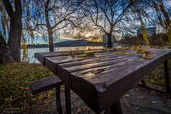 Autumnal afternoon (Rakuli) Tags: ifttt 500px autumn park leaves landscape water nature guidance tree summer fall leaf season bench grass wood seat garden outdoors wooden footpath willow weeping canberra no person fair weather