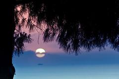 Sunset (pinomangione) Tags: pinomangione tramonto sunset sun tropea costadeglidei landscape tree