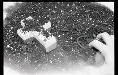 Untitled (Robbie Ingram) Tags: film black white shoot art fine religion philosopy ilfordhp5 nikon fe beach dirt earth still life vanitas is dead water pond