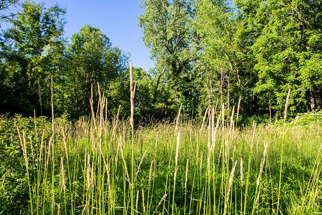 Beechwood Nature Preserve - June 21, 2017