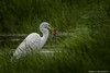 Life is Hard (murf50) Tags: owensound paulmurphy eat egret greass nature sweetlordnatureisbrutal