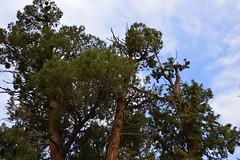 DSC_0178 (Six Sigma Man (2.700.000 views)) Tags: bigbear california bigbearlake cougarcresttrail nikon nikond3200