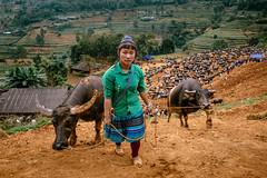 Can Cau Market, Northern Vietnam (syukaery) Tags: vietnam market people buffalo travel