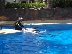 DSC00573 (jrucker94) Tags: vegas water dolphin swimming show secretgarden