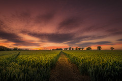 After the sun (unciepaul) Tags: sunday sunset fields evening weekend landscape lines path longwalkbutworthit lightroom