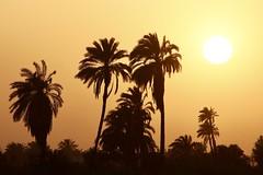 Nile River (Ferdinand Reus) Tags: nile egypt trees sunset palms cairo