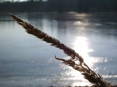 2005-02-06 15-13-54_13.JPG (pschreiner77) Tags: losheimamsee saarland deutschland