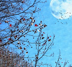 nightfall (CatnessGrace) Tags: blue artistic winter autumn painterly art moon fullmoon landscapes nature natureart plants trees silhouettes leaves red coth5