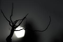 Eerie... (Laurie4593) Tags: macromondays bottomsup macro roots silhouette eerie dark darkbackground canonrebelt3i
