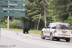 alaska toutr day 5 (11 of 18) (Photo-Flare) Tags: alaska ny newyork personalvacationphotographer phototours photographyfortravelers vacationphotographer wildlifephotographers honeymoonideas