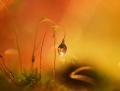 A little shine of peace (miss gecko) Tags: shine peace moss concept macro