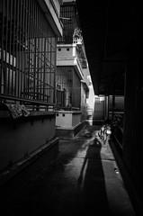 Shadow (tumivn) Tags: shadow gloaming streetphotography street selfie ricohgr
