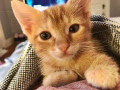 """Pack a pillow and blanket and see as much of the world as you can. You will not regret it."" ―Jhumpa Lahiri 🐈 (anokarina) Tags: appleiphone7 highlands louisville kentucky ky kitty kitten"