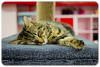 Sleeping Ruby: Cat Cuddle Cafe (Craig Jewell Photography) Tags: catcuddlecafe adopt adoption asleep australia brisbane cafe cat galore musgraveroad pet pussiesgalorerescue redhill rescue rescues sleeping snoozing f28 ef40mmf28stm ¹⁄₅₀sec canoneos1dmarkiv iso800 40 20170704174250x0k1098cr2 noflash 0ev