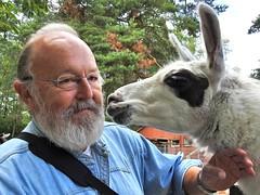 Kussie Kussie, 2 Kamele im Filmtierpark. (Wallus2010) Tags: lama filmtierpark walter kuss liebe zuneigung nikon p900
