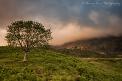 Last Light On Quinag (.Brian Kerr Photography.) Tags: scotland scottishlandscapes scottishhighlands scotspirit sony scottish quinag mountains landscapephotography photography photo nature naturallandscape natural outdoor outdoorphotography a7rii tree birchtree briankerrphotography briankerrphoto clouds sunset mountainside light availablelight sunlight colours landscape