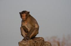 (AAcerbo) Tags: angkorwat cambodia monkey