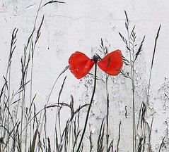P6090098-001 (annechr) Tags: flower poppy swansong minimalism minimal simple simplicity red