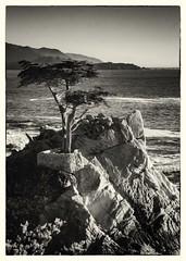 The Lone Cypress of the 17 Mile Drive (3) (CDay DaytimeStudios w/1,000,000 views) Tags: 17miledrive californiasateparks carmelca coastline landscape longcypress montereybay montereyca ocean on pacificcoast rocks seascape sky water