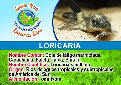 loricaria