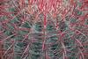 Hampton Court Flower Show - Cactus (Lark Ascending) Tags: cactus spines spiny shart threads hairy prick succulent plant hamptoncourt flowershow sharp