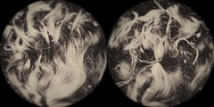 Doll hair-10967 (Poetic Medium) Tags: moldiv toy stilllife hair kitcamghostbird snapseed ipod doll diptych