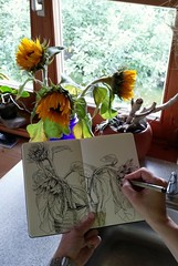Sunflowers fading away... (Jutta Richter) Tags: sunflowers sketch skizze dailyartwork drawing zeichnung moleskine skizzenbuch sonnenblume