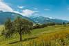 Uttendorf, Austria (domarffm) Tags: uttendorf austria österreich landschaft landscape berge mountains tree baum green sky