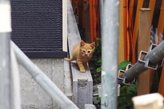 Today's Cat@2017-07-09 (masatsu) Tags: cat thebiggestgroupwithonlycats catspotting pentax mx1