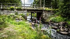 _61A4240.jpg (fotolasse) Tags: stenfors natur nature sweden sverige småland kronoberg å vatten water river bäck sten grönt green canon hdr 16x9 tingsryd