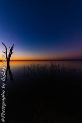 IMG_5499 (biglaptogs) Tags: barmera lakebonney riverland sa states sunsetsunrise