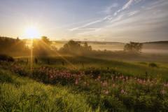 Un matin brumeux de Juillet (gaudreaultnormand) Tags: brume canada été fleurslumière frais leverdesoleil quebec saguenay sunrise champ paysage
