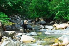FlyFisher DSC_3706 (touhenboku) Tags: iwana char fly fishing flyfishing stream branch water rock
