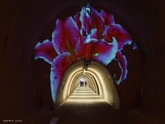 Floraart exhibition underground tunnel8