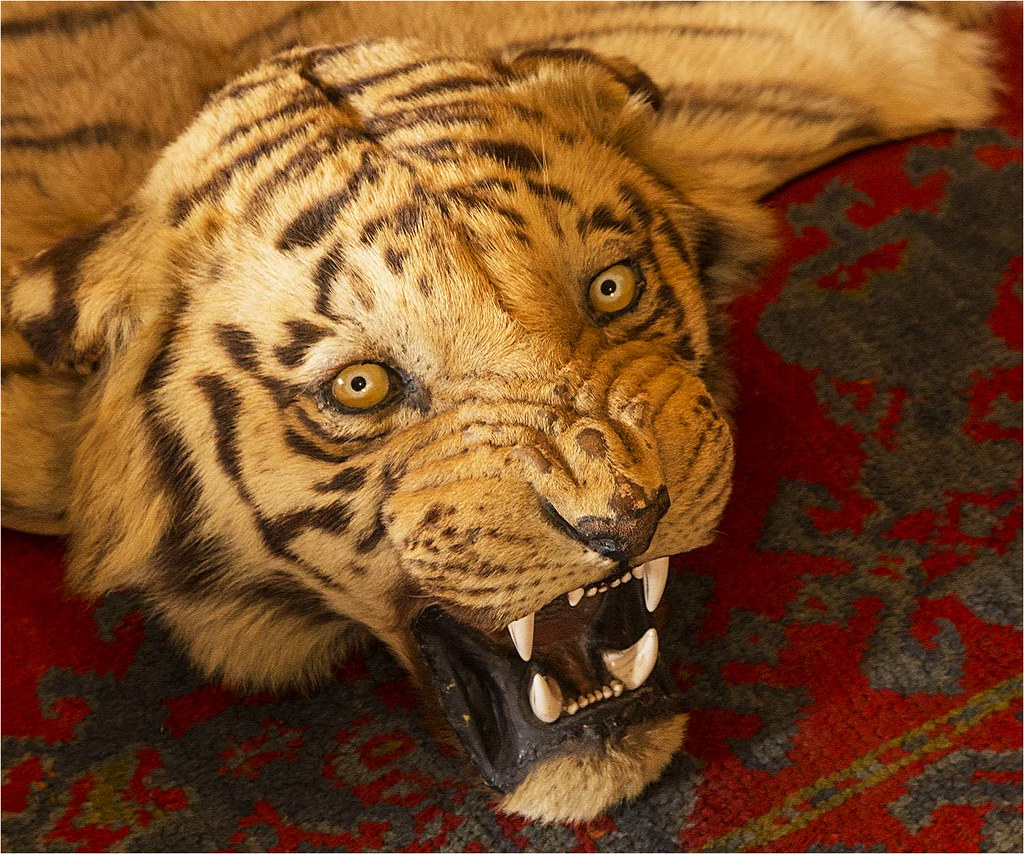 The World's Best Photos Of Taxidermy And Tiger