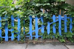 HFF (Pascal Volk) Tags: berlin althohenschönhausen sandinistrase berlinlichtenberg zaun fence valla cerca blau blue fencedfriday wideangle weitwinkel granangular superwideangle superweitwinkel ultrawideangle ultraweitwinkel ww wa sww swa uww uwa canoneos6d sigma24mmf14dghsm|art 24mmf14 24mmlens unpointquatre onepointfour 24mm azul