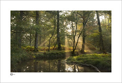 Woodland View II (Clicker_J) Tags: colour earlymorning forest golden highlight lighting landscape light leafs naturallight nikon sunlight sunrise trees water woodland woods
